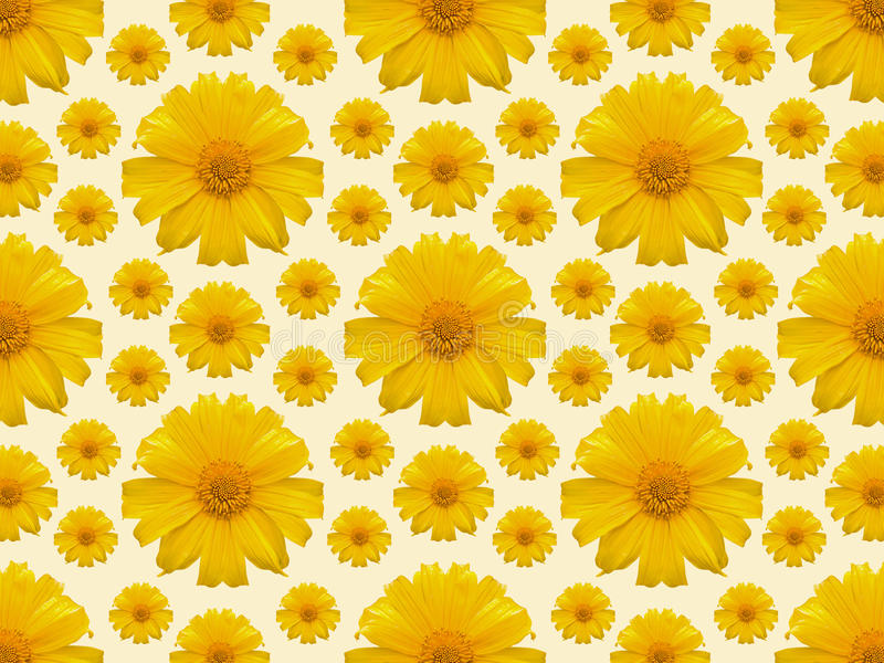 Yellow flower repeat background. Repeat background of A Mexican sunflower weed stock photography