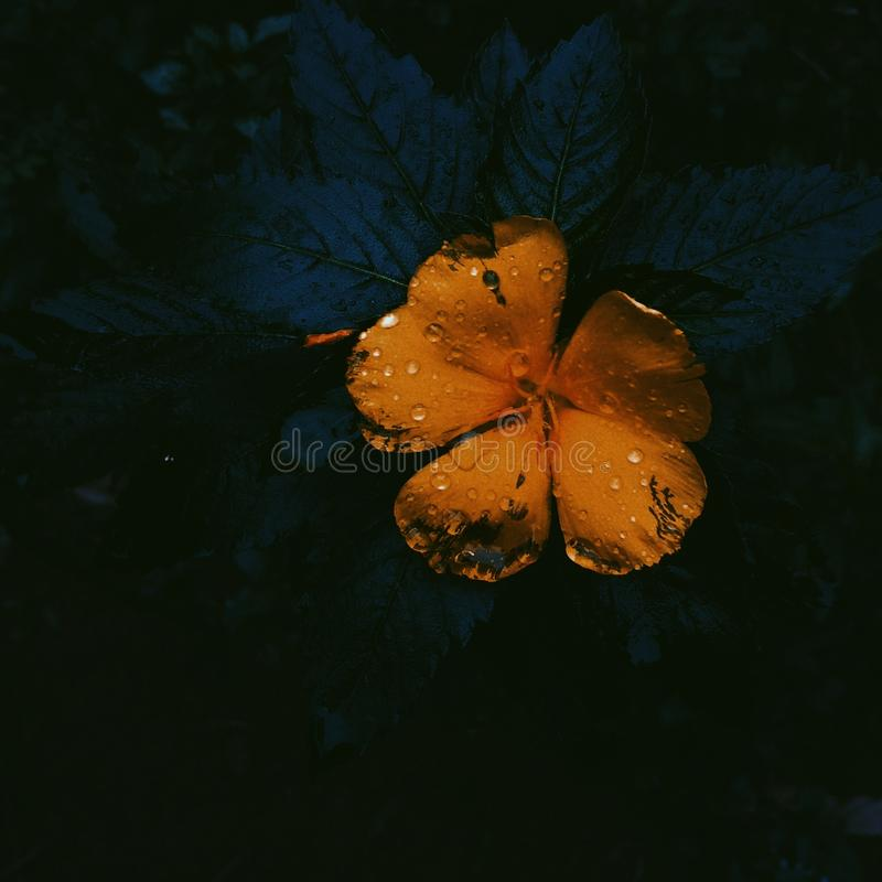 Yellow flower. royalty free stock photos