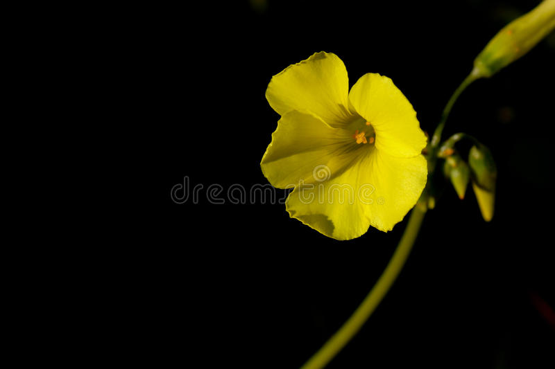 Yellow Flower stock photos