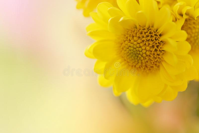 Download A Horizontal Presentation Of A Yellow Flower. Stock Image - Image of artistic, compassion: 115830967