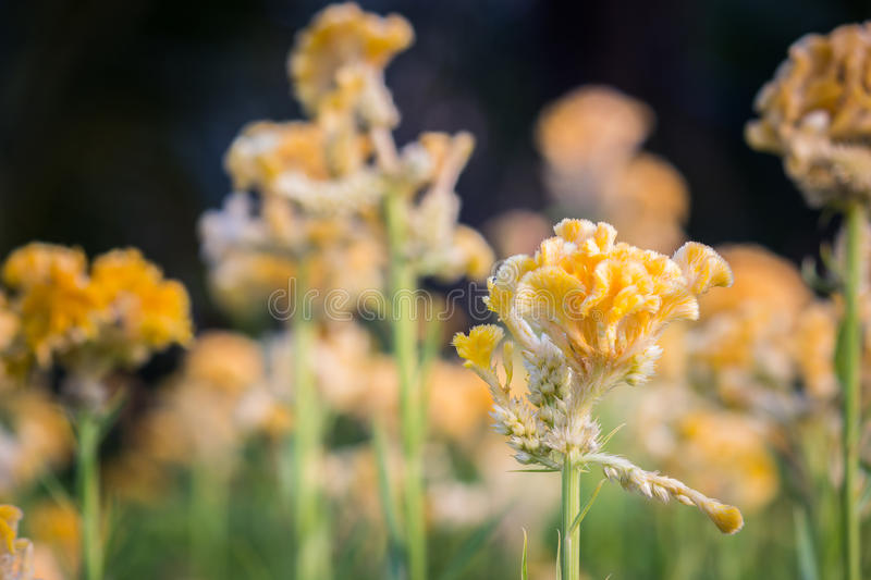 Yellow flower. Spring background with beautiful yellow flower stock photo