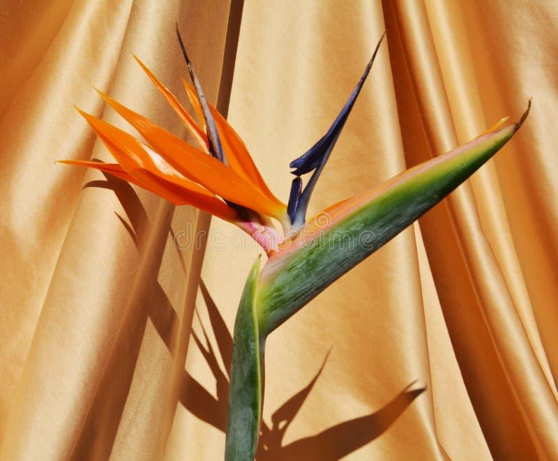 Yellow flower, symbol of joy royalty free stock image