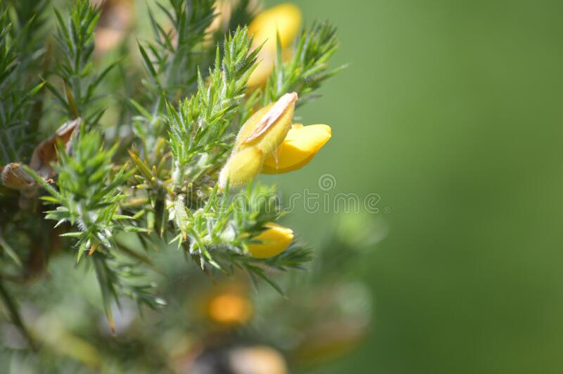 Yellow flower on a tree stock photography
