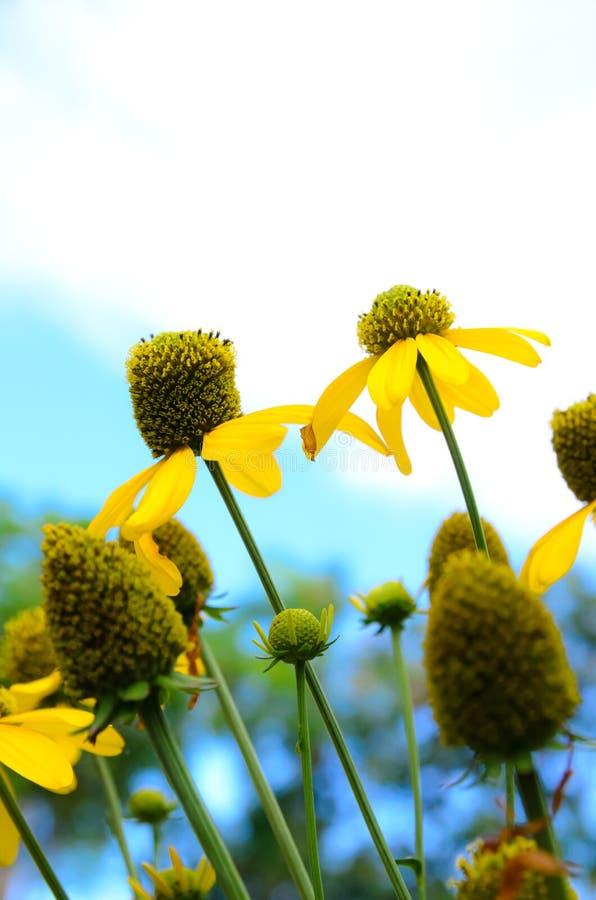 Download Yellow flower stock photo. Image of single, pistil, blossom - 31106034
