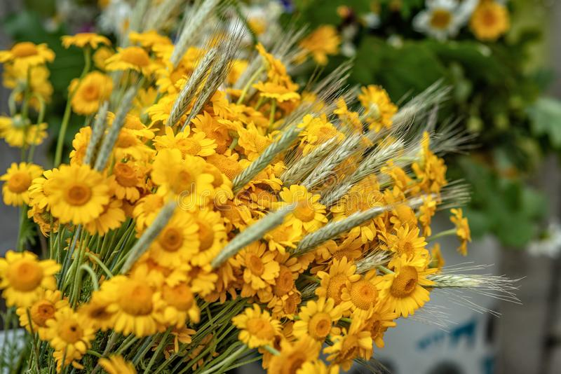 Yellow flower and wheat crop bouquet. Close-up photograph. Yellow flower and wheat crop bouquet. Close-up photograph stock photo