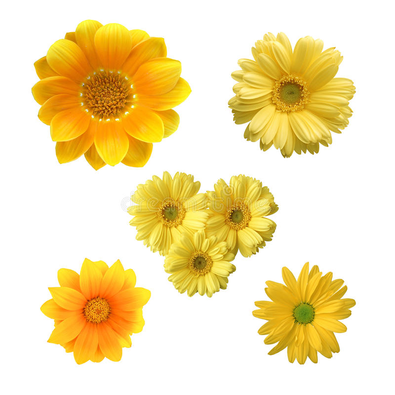 Free Yellow Flowers Stock Image - 15816261