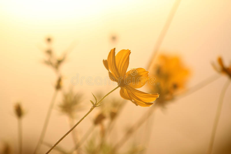 Download Yellow flowers stock image. Image of glow, colorful, isolated - 19186215