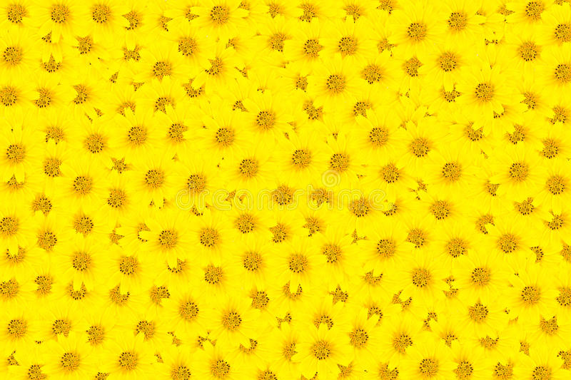 Download Yellow Flowers stock image. Image of freesia, flora, celebrate - 26431183