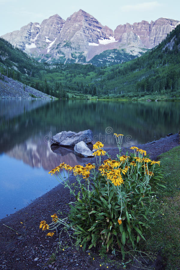 Download Yellow Flowers stock photo. Image of rocky, colorado - 26548366