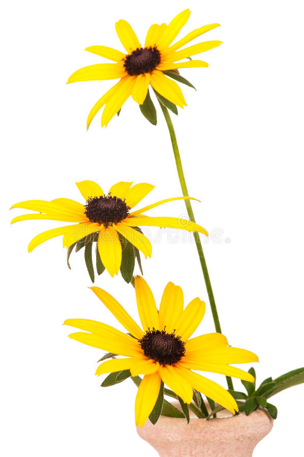 Download Yellow Flowers Stock Image - Image: 27635571
