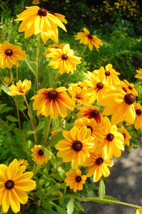 Free Yellow Flowers Royalty Free Stock Photos - 4049258