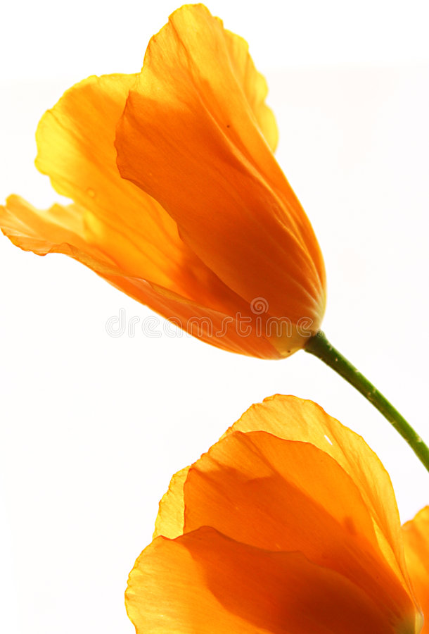 Free Yellow Flowers Royalty Free Stock Images - 419949
