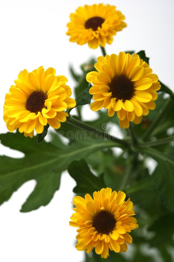 Download Yellow flowers stock photo. Image of pretty, many, flower - 4654284