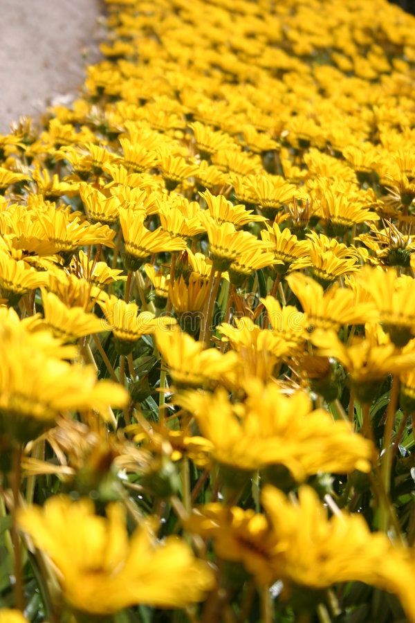 Download Yellow flowers stock image. Image of beautiful, garden, field - 90371