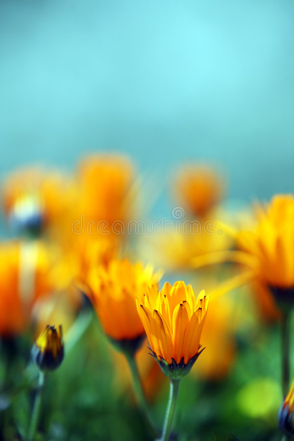 Yellow flowers. stock image