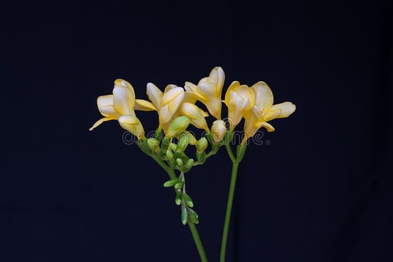 Yellow Flowers Free Public Domain Cc0 Image