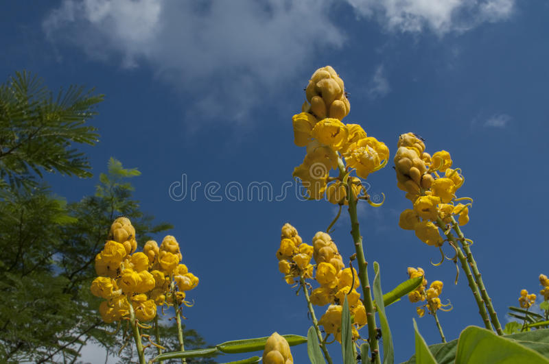 Yellow flowers against blue sky royalty free stock photos