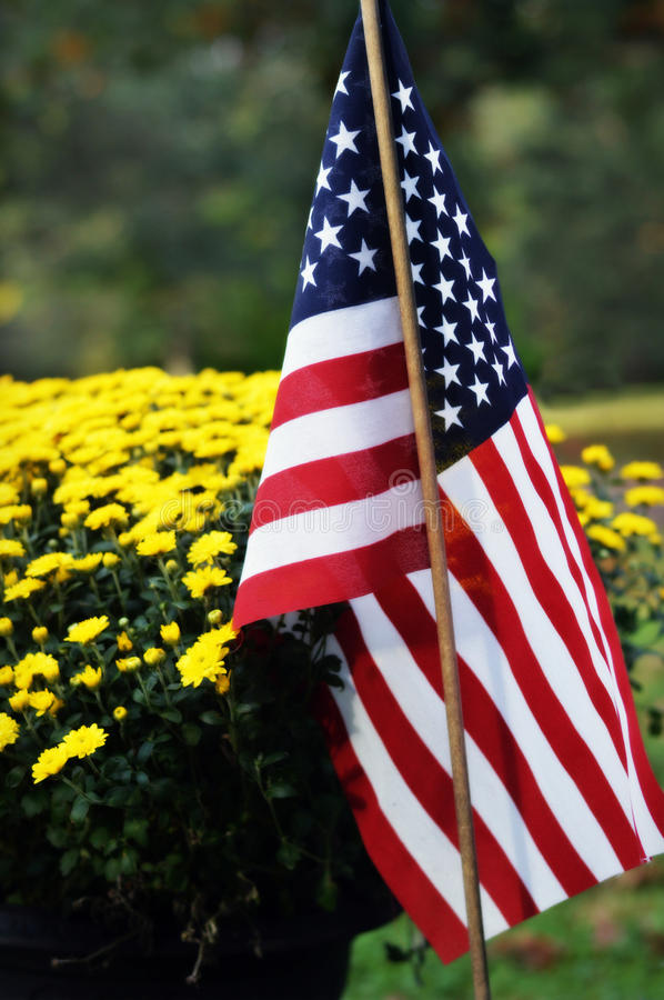 Yellow Flowers with American Flag. Some yellow fall mum flowers with a red, white and blue american flag in front royalty free stock photo