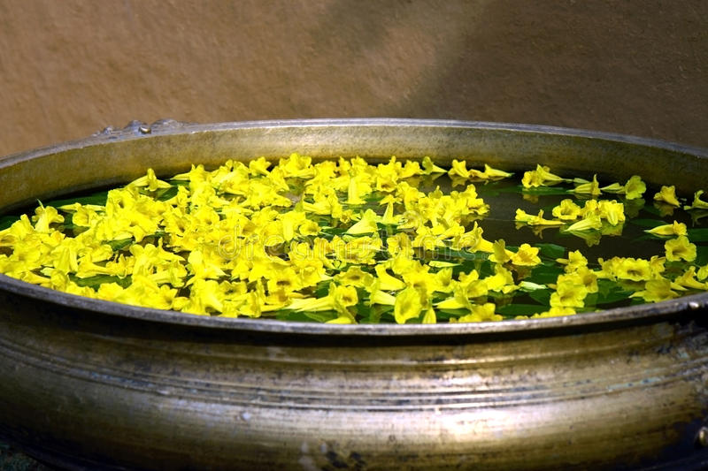 Yellow flowers in ancient garden tub with  water