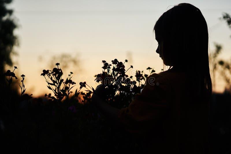 Silhouette flower little girl night evening. Yellow flowers autumn lifestyle sad black sky royalty free stock image