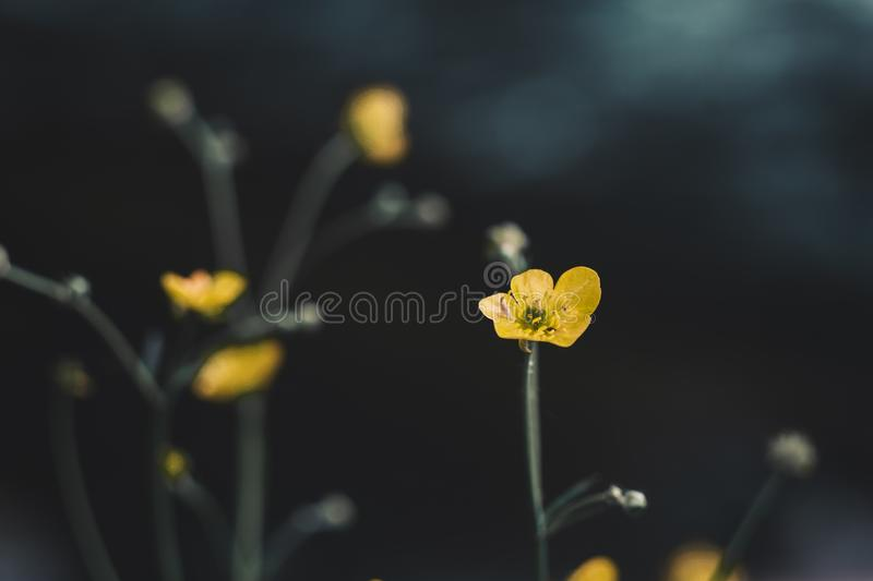 Yellow flowers on background bokeh stock photo