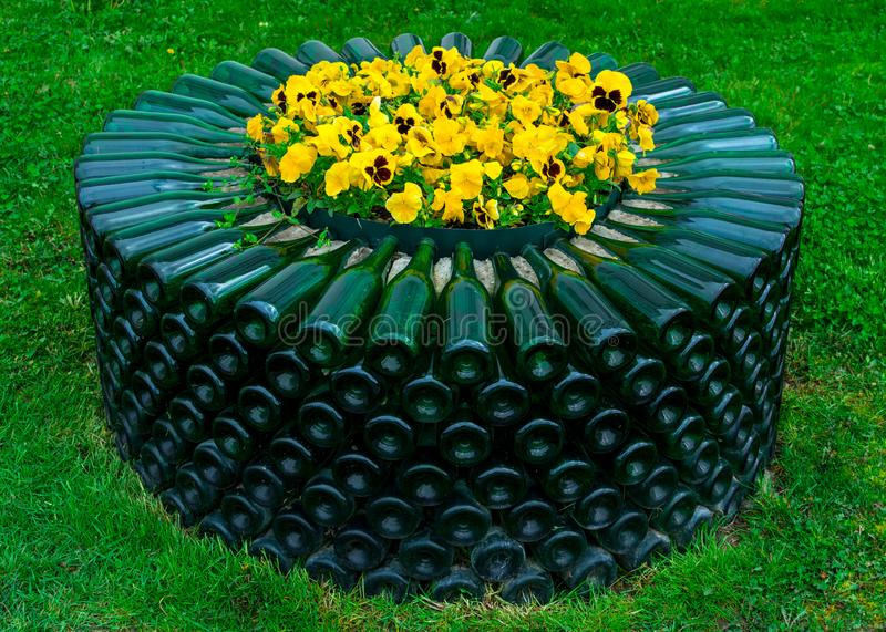 Yellow flowers in a bed of empty glass green wine bottles, Abrau-Durso stock photography