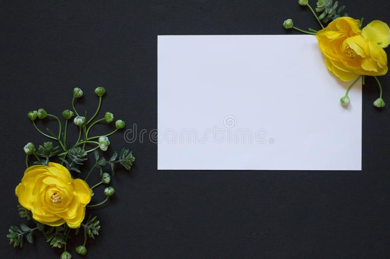 Blank. Yellow roses. Full frame. stock photography