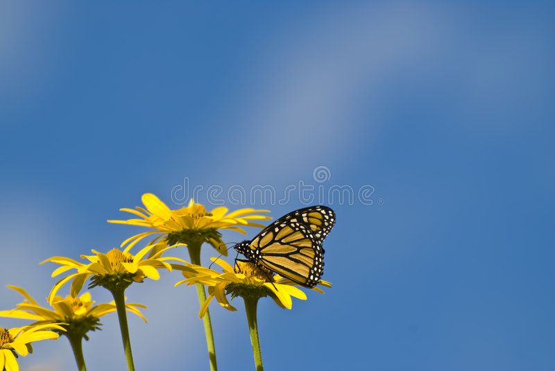 Download Yellow Flowers And Butterfly Stock Image - Image of insecta, light: 5207995