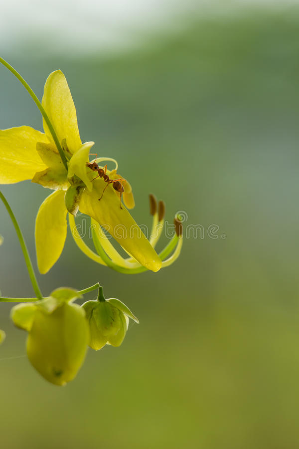 Yellow flowers stock image image of nature bright macro 71790715 download yellow flowers stock image image of nature bright macro 71790715 mightylinksfo