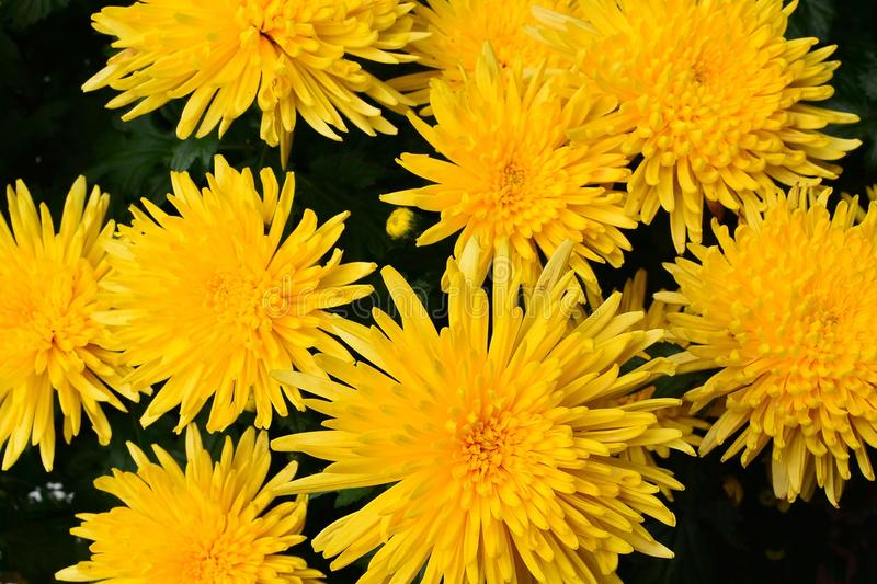 Summer of yellow flowers royalty free stock images