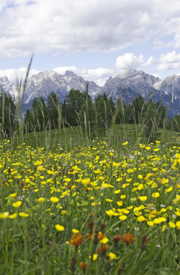 Download Yellow Flowers In The Dolomites Stock Image - Image: 19639417