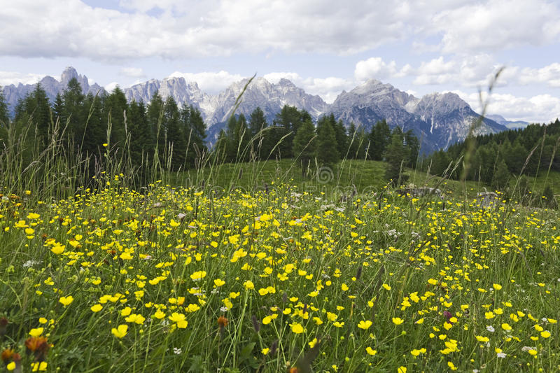 Yellow Flowers in the Dolomites