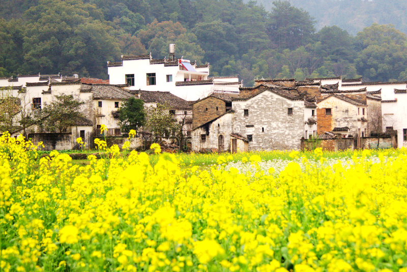 Yellow flowers in farm stock photos