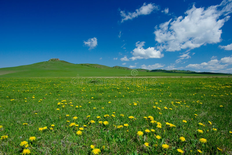 Download Yellow flowers in field stock photo. Image of blue, space - 5758856