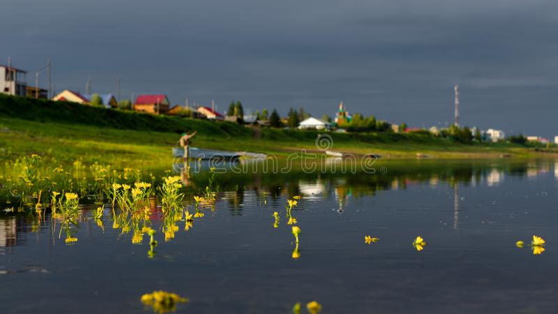 Yellow flowers filled overflowing of the Northern river basin in Yakutia in the water on the background of the houses. stock images