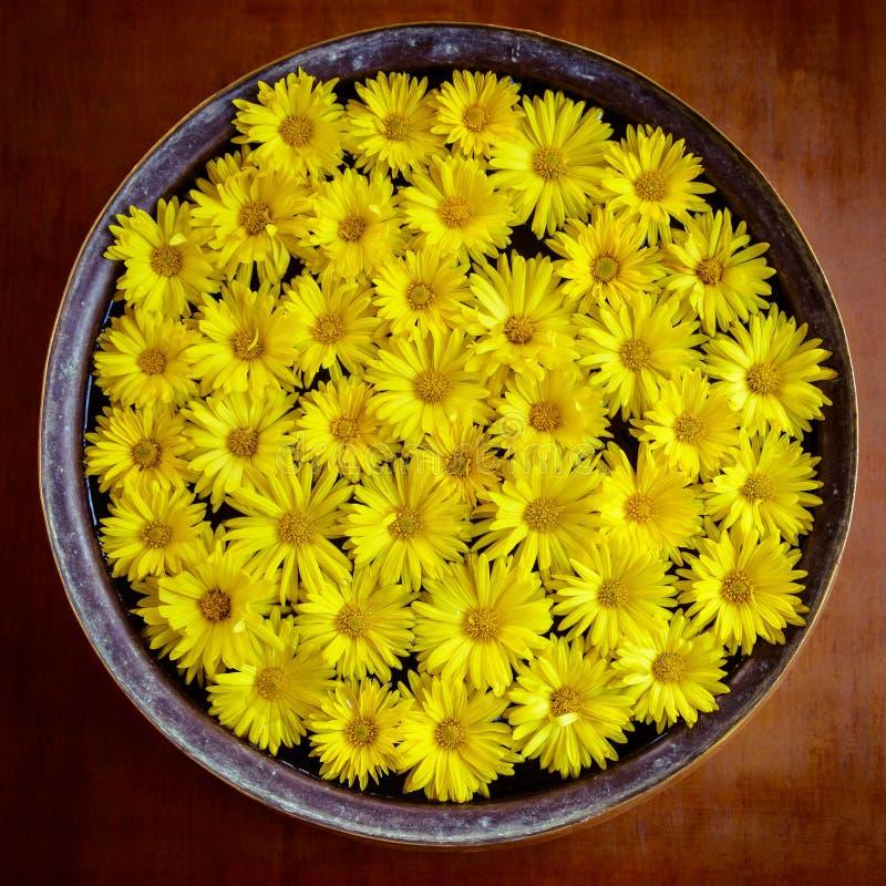 Download Yellow flowers stock photo. Image of season, flower, symbolic - 36361322