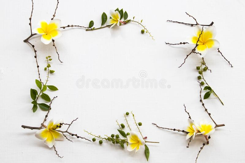 Yellow flowers frangipani local flora of asia with dried branch. Arrangement flat lay square postcard style on background white stock photo