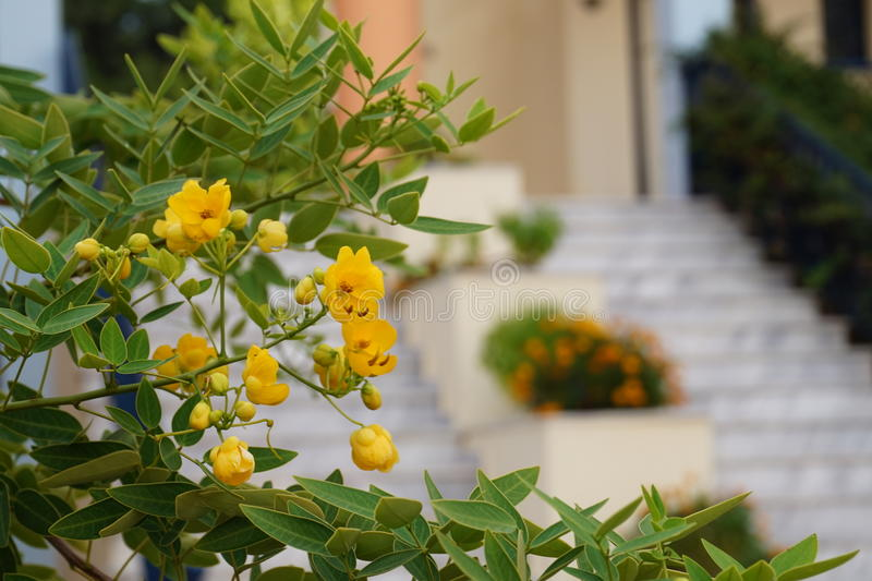 Yellow flowers in front of blurred stairs. Yellow flowers peek from the side, stairs in the background. Pefkochori, Kassandra, Greece stock image