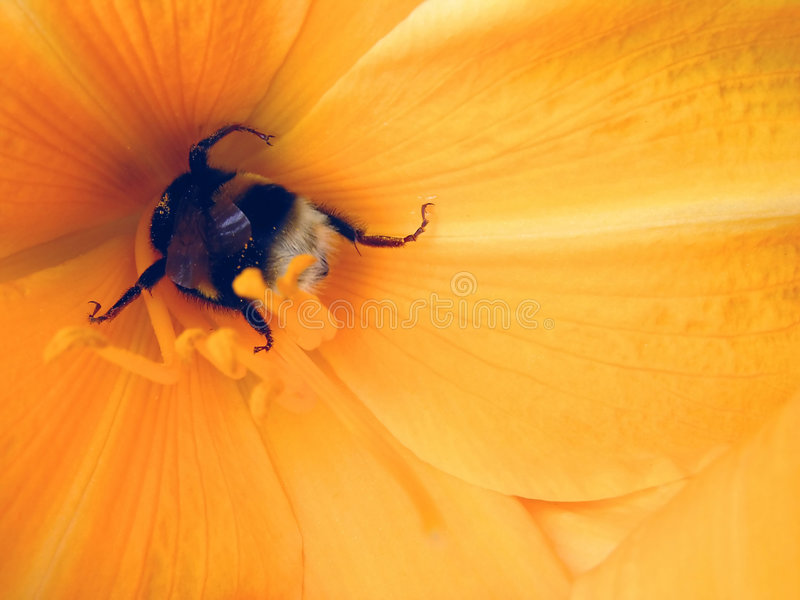 Yellow flowers and gadfly, bee stock images