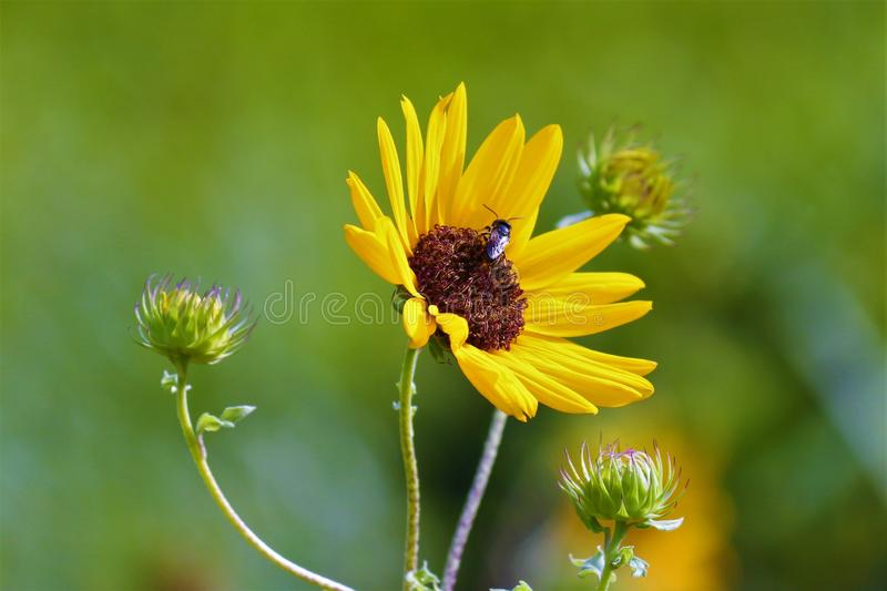 Yellow flowers in the Gardens in nature world. Yellow flowers gardens nature world royalty free stock images