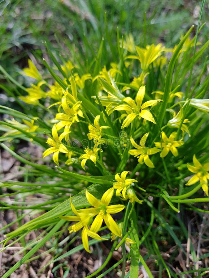 yellow flowers in green forest royalty free stock photos