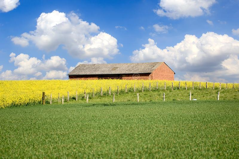 Yellow flowers and Green grass against the cottage. stock photography