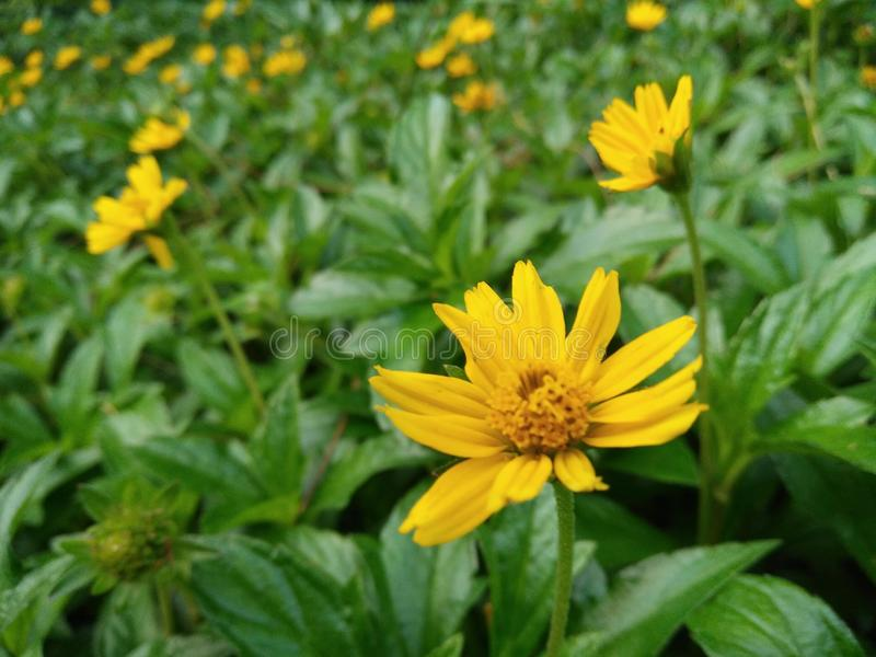 Yellow flowers on green grass stock photography