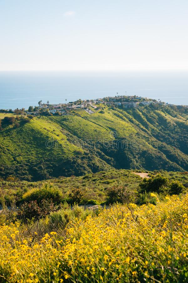 Yellow flowers with houses, green hills, and the Pacific Ocean from Top of the World, in Laguna Beach, California.  stock images