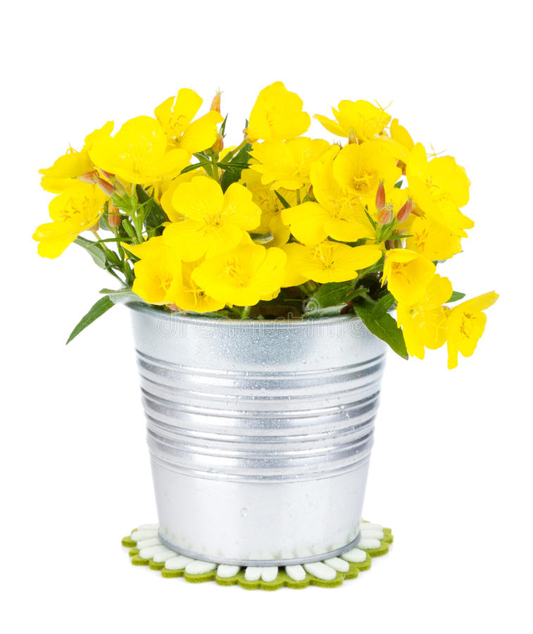 Free Yellow Flowers In Bucket Royalty Free Stock Image - 40380426