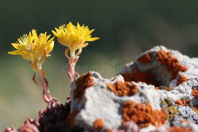 Download Yellow Flowers Macro Stock Photography - Image: 179362