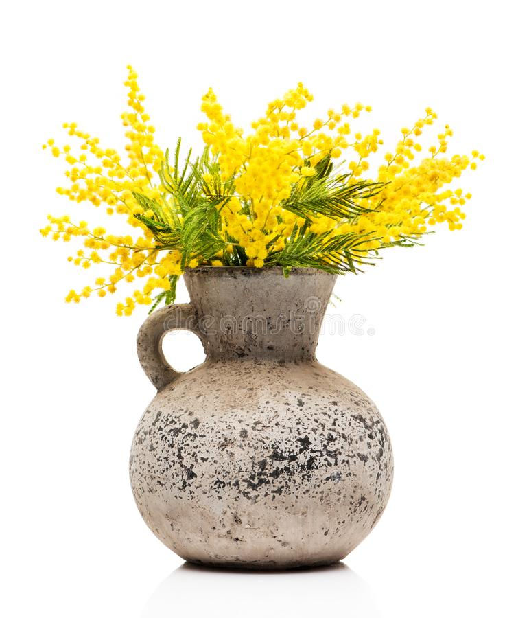 Yellow flowers mimosa in a vase royalty free stock image