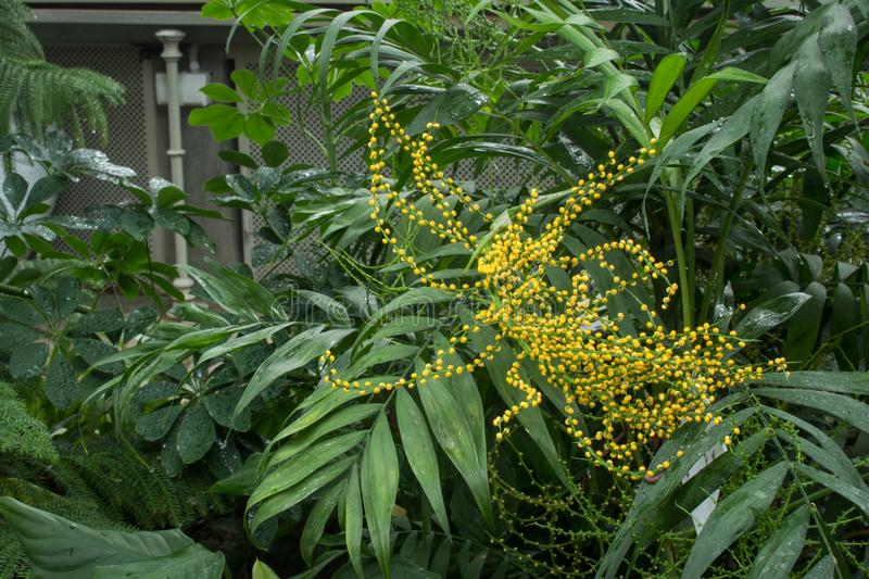 Palm House Plant With Yellow Flowers on vine plant with yellow flowers, broadleaf plant with yellow flowers, succulent plant with yellow flowers, fern plant with yellow flowers,
