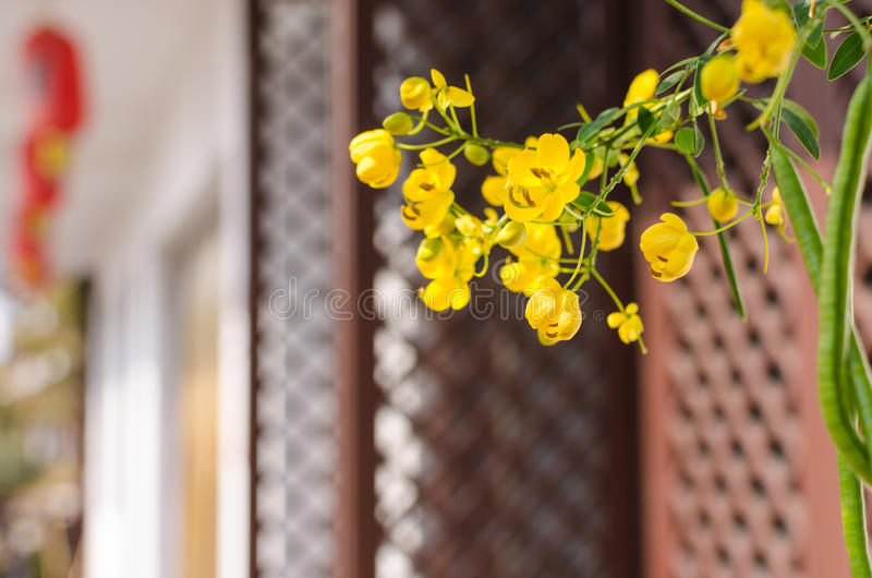 Yellow flowers stock photography