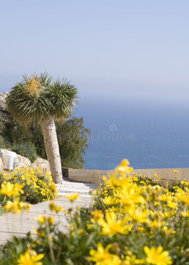Yellow flowers with palmtree stock photo image of alicante bright download yellow flowers with palmtree stock photo image of alicante bright 13453734 mightylinksfo